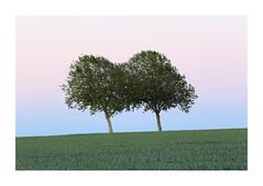 Möhnesee - 2 (Michael.Kemper) Tags: canon eos 6d 6 d ef 70200 70 200 f4 f 4 l usm deutschland germany nrw nordrheinwestfalen north rhine rhinewestphalia westphalia möhnesee moehnesee möhne moehne see lake sauerland kreis soest gemeinde flus fluss river reservoir mohne mohnesee haar haarstrang wippringsen büecke buecke tree trees baum bäume spring frühling blue hour blaue stunde sunset sonnenuntergang