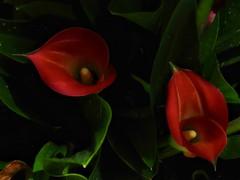 2 Surprise (Robert Cowlishaw (Mertonian)) Tags: spring2019 lunchstroll 4sophia canonpowershotsx70hs sx70hs powershot canon robertcowlishaw mertonian beauty beautiful wonder awe ineffable soft deeply