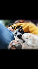 Noia.... (becco6851) Tags: animali cane persona