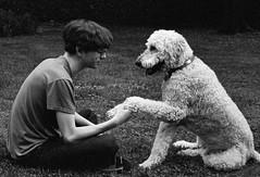 Love (Dalliance with Light (Andy Farmer)) Tags: leicam6 iso1600 summicron50mm dog bw love film trix shake diafine