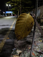 Leaf (sachdevabhiraj) Tags: googlepixel teampixel pixel nightlife leaf nature nightleaf