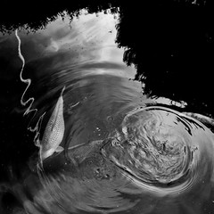 Pond (evans.photo) Tags: shapes abstract water textures ripples fish pond blackwhite monochrome
