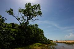 Buffalo Creek Beach (Markus Branse) Tags: buffalo creek beach australia australien aussie oz sonne sun sol baum bäume tree trees strand strände wasser water tropen wald wood forest woods wälder himmel sky blau blue natuur natur nature landschaft landscape darwin leepoint