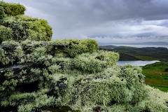 Lichen on Dun Carloway Broch (mike_wawro) Tags: lewis