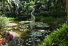 3TR_7031 (terrificphotos) Tags: waterlilies lotus rainboweucalyptus dragonfly lizard water bamboo flowers lilypads chenilleplant