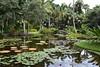 3TR_7045 (terrificphotos) Tags: waterlilies lotus rainboweucalyptus dragonfly lizard water bamboo flowers lilypads chenilleplant