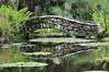 _1TR2558 (terrificphotos) Tags: waterlilies lotus rainboweucalyptus dragonfly lizard water bamboo flowers lilypads chenilleplant