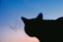 000061рр (23/25) Tags: плёнка 35ммплёнка film filmphotography 35mmfilm kodakfilm minoltax700 analoguevibes shootfilm staybrokeshootfilm cat blackcat