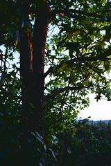 Sundown in Wiesendangen (titan3025) Tags: leica leicam6 m6 summicron 35mm kodak ultramax 400 zürich 2019