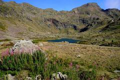 Llacs de Tristaina / Andorra (38) (Ull màgic (+1.500.000 views)) Tags: llacsdetristaina andorra pirineus pirineos nature naturaleza nubes paisatge paisaje landscape muntanyes montañas aigua agua water llac lago lake flors prats vall fuji xt1