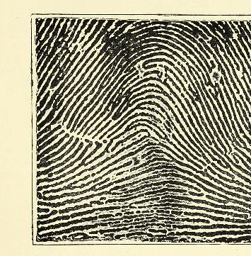 This image is taken from Page 27 of Classification and uses of finger prints [electronic resource]
