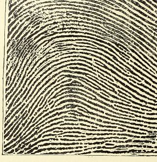 This image is taken from Page 26 of Classification and uses of finger prints [electronic resource]