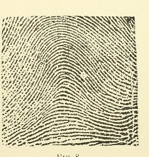This image is taken from Page 25 of Classification and uses of finger prints [electronic resource]
