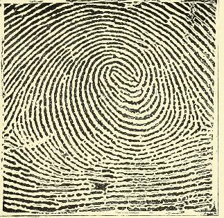 This image is taken from Page 37 of Classification and uses of finger prints [electronic resource]