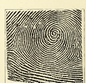 This image is taken from Page 36 of Classification and uses of finger prints [electronic resource]