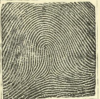 This image is taken from Page 29 of Classification and uses of finger prints [electronic resource]
