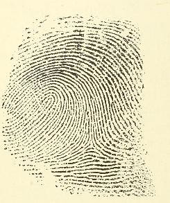 This image is taken from Page 20 of Classification and uses of finger prints [electronic resource]