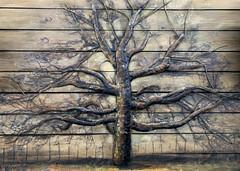 metal tree art (zamburak) Tags: metal tree art wood 365the2019edition 3652019 day160365 09jun19
