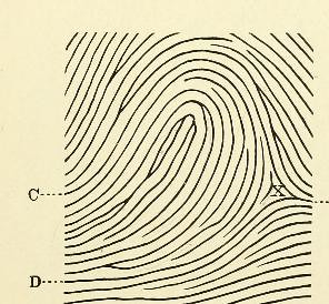 This image is taken from Page 31 of Classification and uses of finger prints [electronic resource]