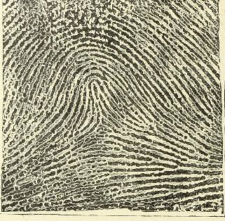 This image is taken from Page 28 of Classification and uses of finger prints [electronic resource]