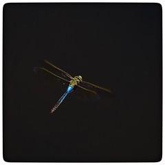 Dragonfly (vui.la9) Tags: lowkey dragonfly