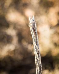 Weed Textures (LauriNovakPhotography) Tags: redrockcanyon lasvegas ig9redrock