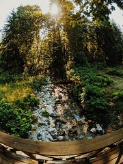 Babbling brook. (thnewblack) Tags: googlepixel3xl madebygoogle smartphone cameraphone momentlens superfish fisheye outdoors forest britishcolumbia vsco