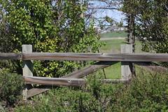 HFF Happy Fence Friday (davebloggs007) Tags: hff happy fence friday calgary 2019