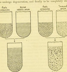 This image is taken from Page 6 of Serums, vaccines and toxines in treatment and diagnosis (Medical Heritage Library, Inc.) Tags: serodiagnosis immunisation passive toxins immunotherapy leedsuniversitylibrary ukmhl medicalheritagelibrary europeanlibraries date1909 idb21507594