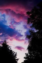 K1AD3452 (B. Gohacki) Tags: pentax k1 ricoh dslr sky sunset colorfuyl trees nature maryland purple blue gold orange clouds