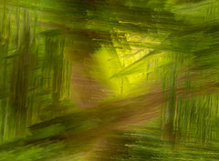 Garden Trail (macjeff*) Tags: chilliwack community date gardentrail fraservalley britishcolumbia clubs mark june 25 phototopic langleycameraclub titles 2019 lcctheme month vedder multipleexposure location vedderriver