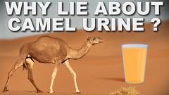 ApauwwbycKMmaxresdefault (m_rushda) Tags: camel urine muhammad islam hadith