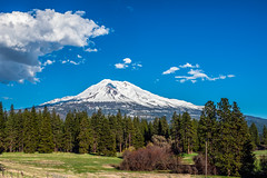 Mount Shasta, Weed, California (paccode) Tags: solemn california d850 landscape tree serious creepy quiet mountain snow clouds weed unitedstatesofamerica
