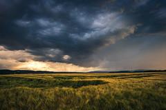 Gewitterzelle am Abend (Gruenewiese86) Tags: gewitter harz ilsenburg wernigerode wetter storm rain regen feld getreide ernte sturm wolken wolkenbildung sonnenuntergang