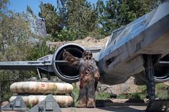 Chewbacca on Planet Batuu at Galaxy's Edge. (LisaDiazPhotos) Tags: lisadiazphotos star wars land galaxys edge batuu planet chewbacca black spire outpost