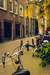 Bike (ROGOdesign) Tags: roja amsterdam amsterdamcity iamsterdam city cityscape architecture arquitectura architecturelovers architecturephotography architectbuilding architecturephotograpy flora flowers flor flower bicycle bike bikelife streetphotography street stilllife urban holland urbanlandscape