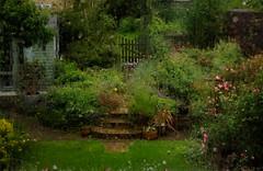 Will it ever stop raining? (judy dean) Tags: judydean 2019 ipad flamingjune summer rain rainrain morerain garden path gate greenlawn steps roses