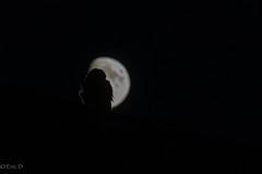 Eagle Owl @night (eric-d at gmx.net) Tags: eagleowl uhu bubobubo eule strigidae ngc eric birdofprey