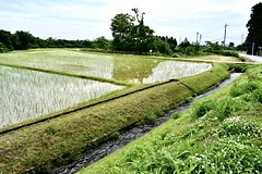 Rice fields on the hill (unikto) Tags: field rice green water hill wood forest tree stream step irrigation watersupply