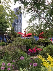 Happy Fence Friday! (peggyhr) Tags: white blue towers bushes trees yellow purple red canada ontario toronto garden flowers umbrellas hff fence peggyhr carolina'sfarmfriends