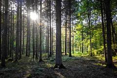 Sunstar - Google Pixel 3a (Andreas Voegele) Tags: googlepixel teampixel light sun forest sunstar landscape andreasvoegelephoto googlepixel3a pixel3a ngc