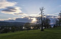 Special tree (mystero233) Tags: tree sun sunset dusk rys sunrays sunlight lastsun scotland scottish uk britain balloch lochlomond loch lake lomond europe nature outdoor landscape park green grass