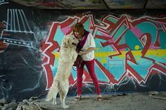 Foto cool con Django (m.lucia81) Tags: django dog goldenretriever graffiti