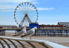 Two birds at Blackpool (Tony Worrall) Tags: welovethenorth nw northwest north update place location uk england visit area attraction open stream tour country item greatbritain britain english british gb capture buy stock sell sale outside outdoors caught photo shoot shot picture captured ilobsterit instragram photosofpreston blackpool resort county town northern lancs lancashire fylde fyldecoast coastal birds wildlife fun pier beach seaside ride sand seagulls