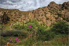 Hoces del Jalón (Fernando Forniés Gracia) Tags: españa aragón zaragoza hocesdeljalón flores paisaje landscape naturaleza nubes