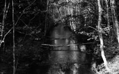 shallow river in forest (Sonofsono) Tags: film finland black bw white graflex speedgraphic largeformat forest river