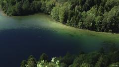 Lac du Grand Maclu (WoPeR 25 ☘️) Tags: jura montagne massif massifdujura eau france francia frankreich franchecomté forêt lefrasnois 39 39130 sony