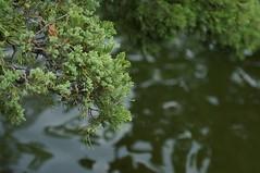 DSC02286- Pond Delight (oliveplum) Tags: pond gardensbythebay leica60f28macro sony marinabay singapore tree reflection water