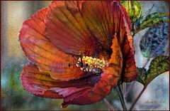 Hibiscus (done by deb) Tags: digitalart digitalpainting deepdreamgenerator brightcolors vividcolor digitalflowerpainting