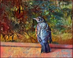 BrightBirds - American Robin (juvenile) (done by deb) Tags: digitalart digitalpainting deepdreamgenerator brightcolors vividcolor digitalbirdart